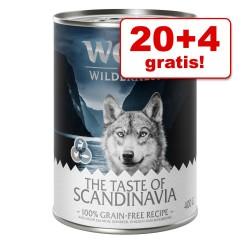 20 + 4 gratis! 24 x 400 g Wolf of Wilderness vådfoder - White Infinity - Hest