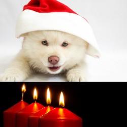 Advents-sjov for dig & din hund - 3. søndag i advent kl. 10.00-11.00