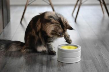 BOB intelligent foderskål til katte