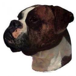 Klistermærke, Boxer