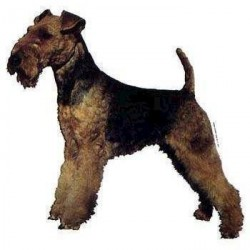 Klistermærke, Welsh Terrier