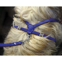 Rosewood Y-sele til hunde - Royal - Blå