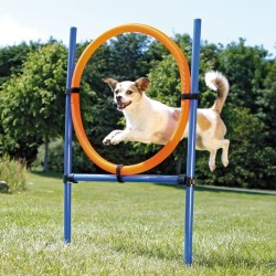 Trixie agility ring